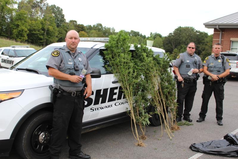 Sheriff's Deputies Find Large Pot Plants in Stewart Co.